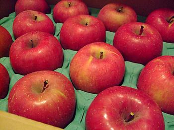りんご_2013.jpg